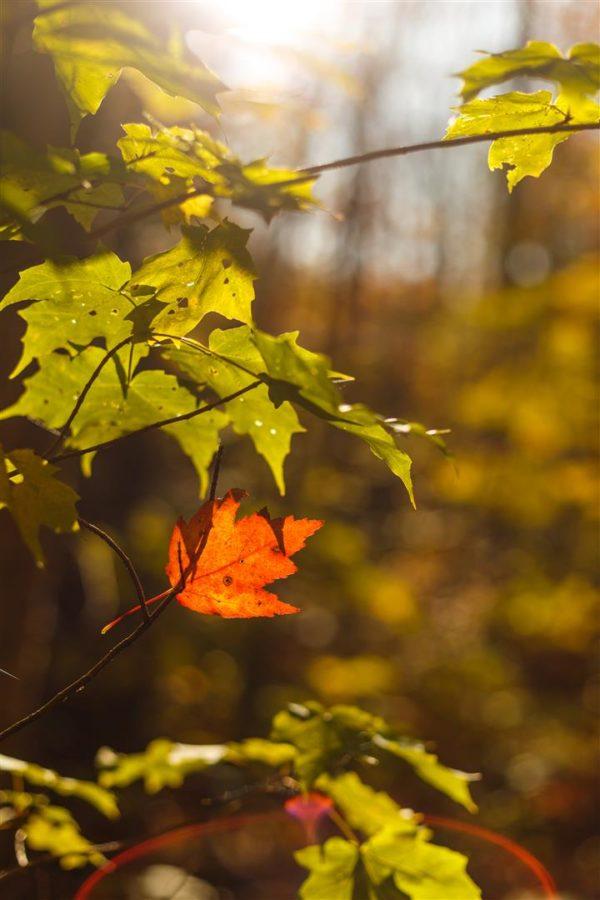 Closeup of Fall Leaves